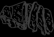 cat-vitello-sanato